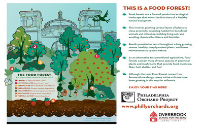 Infographic explaining a Food Forest